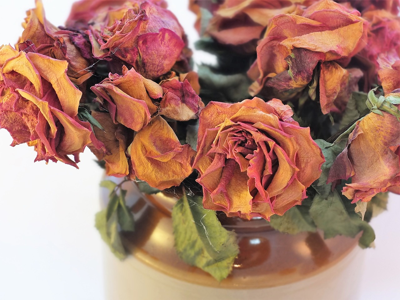 dried-roses-2008690_1280